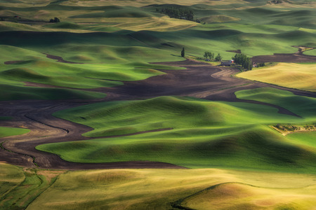 Sun set light at Steptoe Butte, Washington. The beautiful scene of barley and wheat field. Summer travel destination.