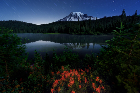 Wildflowers and startrails in Mount Rainier National Park, Washington. Magenta paintbrush at Reflection lake Stock Photo