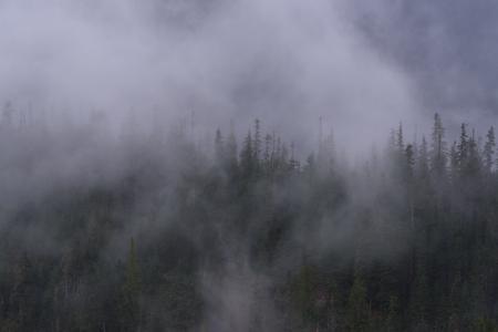 소나무와 노스 캐스케이드 Nartional 공원, 워싱턴, 미국에서에서 strom 후 낮은 구름 스톡 콘텐츠