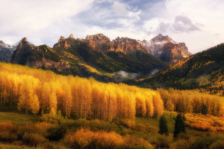 Fall color in Ridgway, Colorado. Beautiful light and aspen tree color with mountain range on the background.