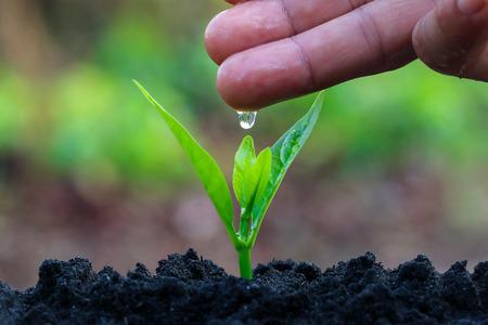 suolo: Durante la piantagione di alberi con piante e irrigazione. Mantenere alberi sano Una volta aggiunto, contribuirebbe a ridurre il riscaldamento globale.