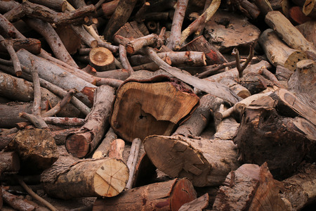 dead trees: La madera muerta debe ser cortado en pedazos y para hacer combustible.