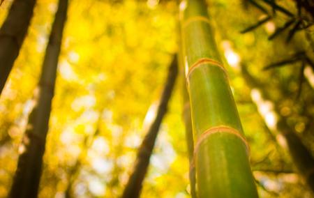 Bambus gerade grün Standard-Bild - 99209083