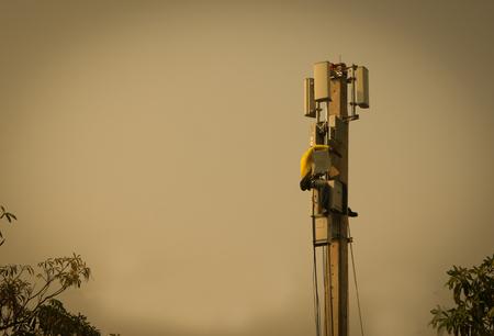 Technician, Update, Install, Telephone Transmitter System in Sunset Time. Standard-Bild - 101858038
