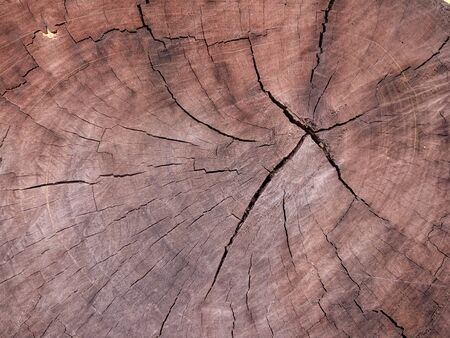 Artistic texture from wooden material. Standard-Bild - 125201027