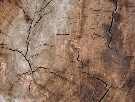 The artistic texture from wooden material. Standard-Bild - 125201052