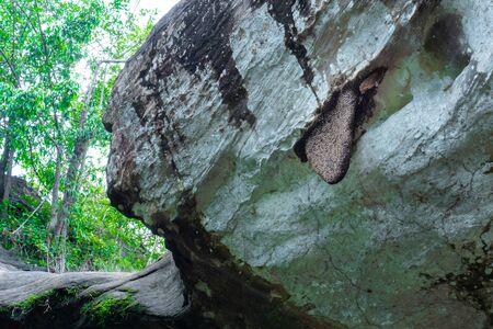Honeycomb on the cliff. Standard-Bild - 128945601