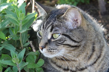 magazine stack: Domestic Tiger Stripe Cat Stock Photo