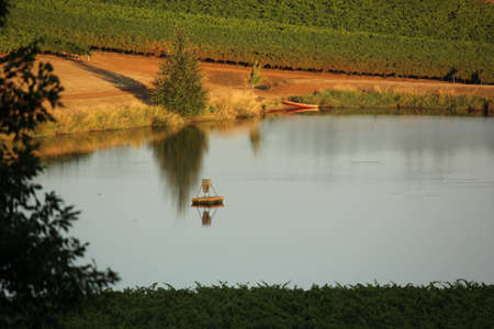 A stunning view of an Oregon Vineyard pond with the late afternoon sun reflecting  its surroundings