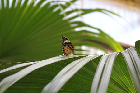 Exotic multicolored relaxed butterfly resting on a green leaf Stock Photo