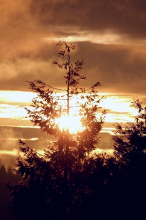 Beautiful sunrise showing a well focused silhouetted tree with sun rising behind and through the branches