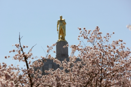 Gold pioneer statue high atop a building shown through blossoming trees on a sunny day with clear blue skies
