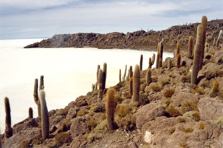 The catci island in Uyuni in Bolivia