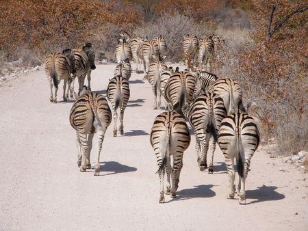 savana: Animals in a wild park