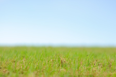 Green grass smooth sky background texture photo