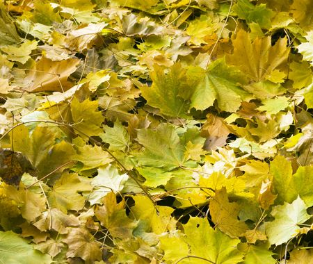 autumn leafs on background colors photo