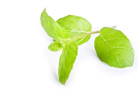green plant on white Stock Photo - 8620591
