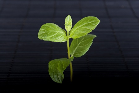 thrive: green plant on black background