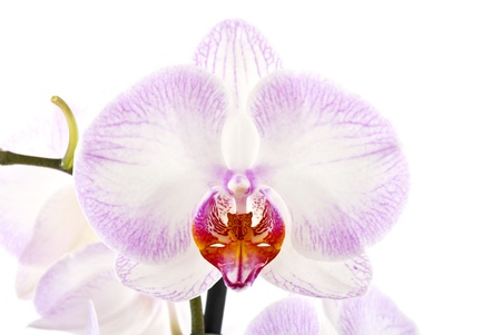 extreme close up: orchid flower