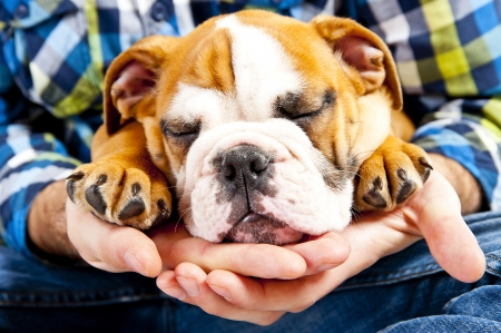 Dog on human hand sleeping photo
