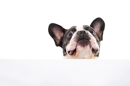 Dog with white card over bright background