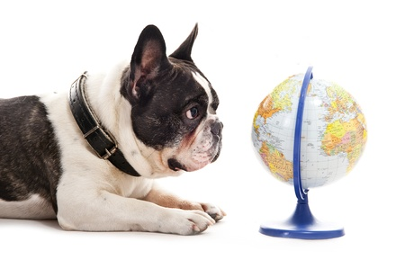 Dog with world map over white background Stok Fotoğraf