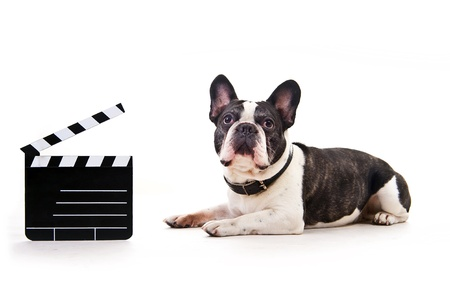 Dog with movie claps over white background photo