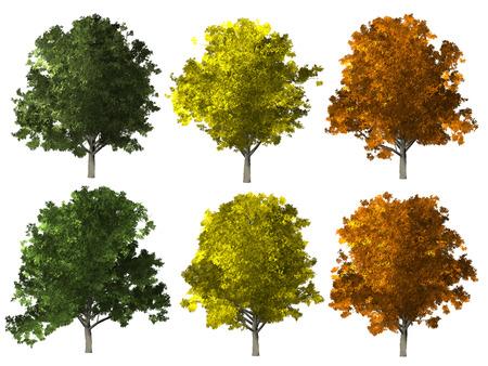 ash tree: Set of ash tree isolated on white background