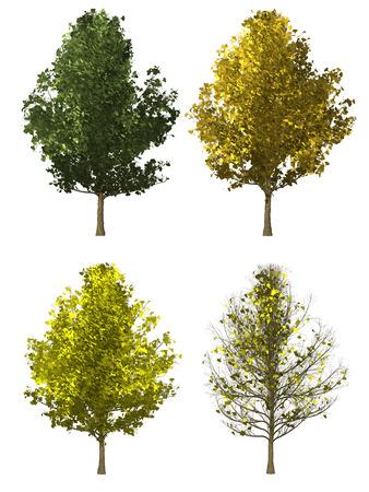 Set van ginkgo boom geïsoleerd op een witte achtergrond Stockfoto