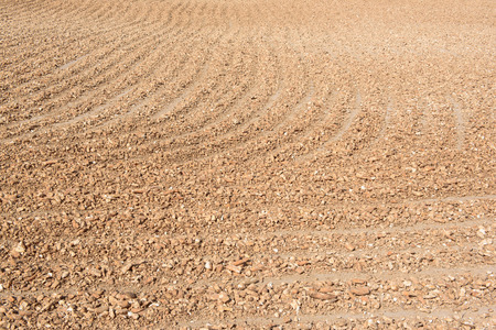 feedstock: Moist manioc root is drying under the scorching sun. Cassava is planted almost everywhere in Thailand, using for cassava starch and ethanol industries. Stock Photo