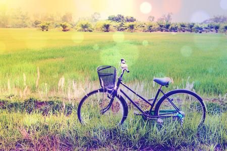 Uitstekend  retro effect van de kleurenstijl met bokeh: Japanse oude fiets  fiets op een groen padiegebied. Dagelijkse activiteiten voor gezinnen en iedereen om te oefenen in een landelijk gebied te midden van natuurlijke schoonheid en rust. Stockfoto