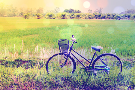 Vintage  retro color style effect with bokeh : Japanese old bike  bicycle in a green paddy field. Daily activity for families and everyone to exercise in rural area amid natural beauty and serenity.
