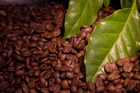 green bean: coffee bean and green leaves