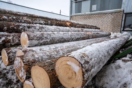 Sawmill in winter. Image of logs covered with snow