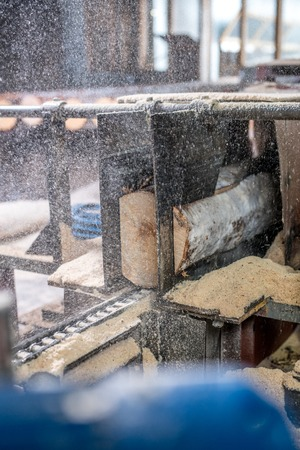 sawing: Woodworking plant. Image of sawdust flying from sawing logs