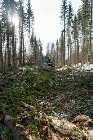 conducts: In winter forest it conducts work on wood harvesting