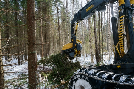 forestry industry: Woodworking in forest. Image of log loader cuts spruce