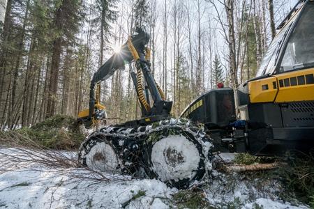 logger: Forestry work. Image of modern log loader cuts spruce