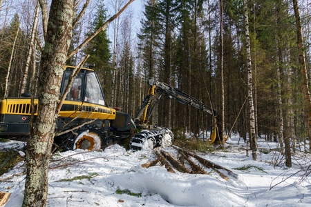 logger: Woodworking in winter forest. Image of logger works