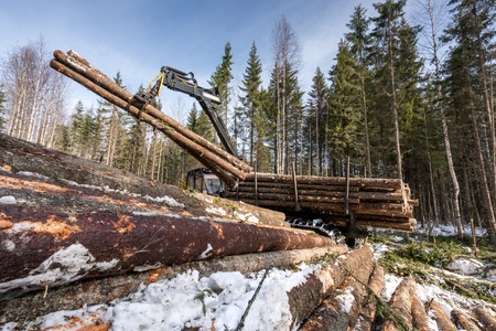 Image of logger loads harvested trunks in winter forest