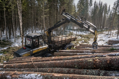 machinery machine: Woodworking in forest. Logger loads harvested trunks