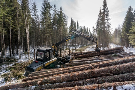 logger: Forestry. Image of logger loads timber in winter woods Stock Photo