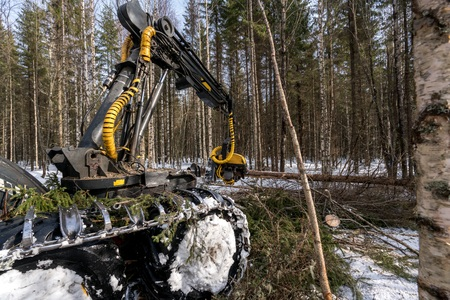 logger: Timber industry. Image of logger cuts tree in winter forest