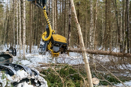 outside machines: Image of logger cut down the tree and sawing it, close-up Stock Photo