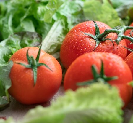 Bright red tomatoes covered by water drops shot among fresh green salad