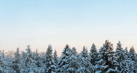 Russian winter forest and sky beautiful landscape Banco de Imagens