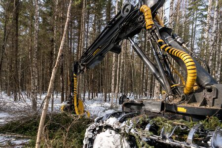 Woodworking. Logger busy working in winter forest Foto de archivo