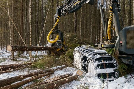 Image of log loader cut down trees in winter forest