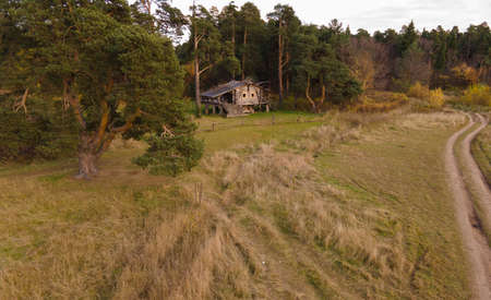 Old wooden shack near coniferous forest
