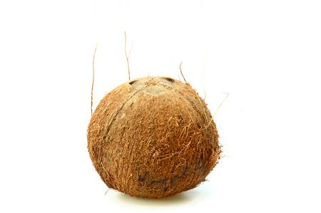 stoma: un marrone peloso di cocco (Cocos nucifera) verticale isolato su sfondo bianco Archivio Fotografico